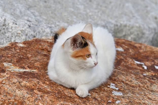猫三昧_1994