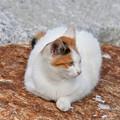 写真: 猫三昧_1994