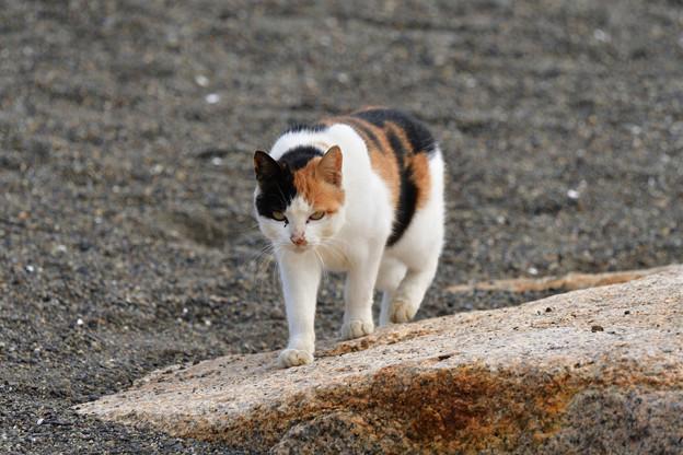 猫三昧_1995