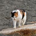 写真: 猫三昧_1995
