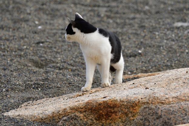 猫三昧_1996