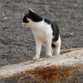 写真: 猫三昧_1996