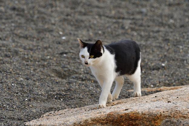 猫三昧_1997