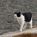 写真: 猫三昧_1997