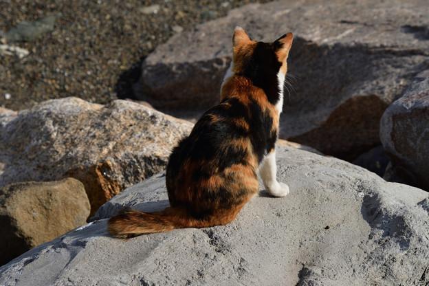 写真: 猫三昧_1999