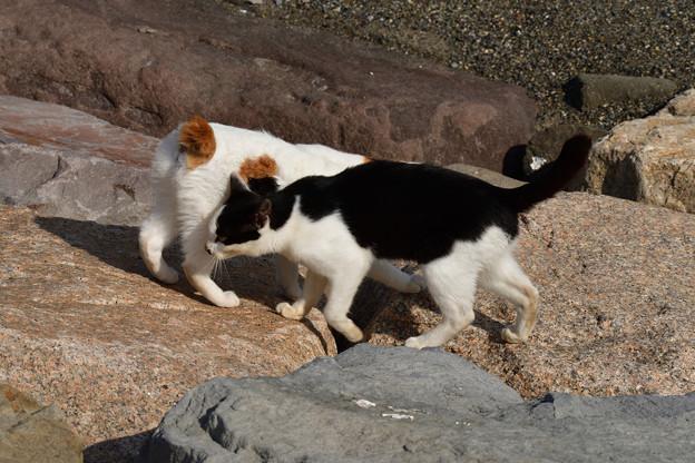 猫三昧_2001