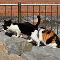 写真: 猫三昧_2002