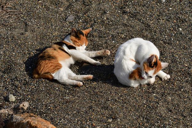 猫三昧_2004