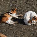 写真: 猫三昧_2004
