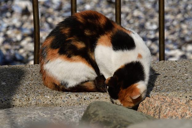 猫三昧_2008