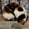 写真: 猫三昧_2008