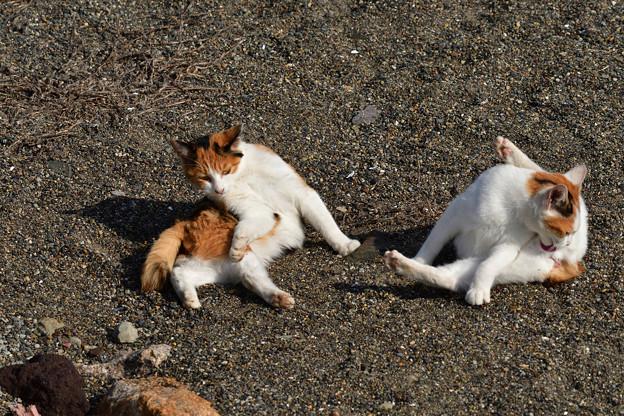 猫三昧_2009