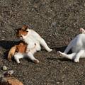 写真: 猫三昧_2009
