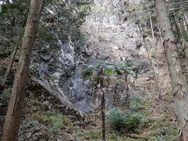 石灰石採掘跡
