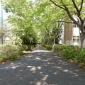 聖ヶ丘遊歩道