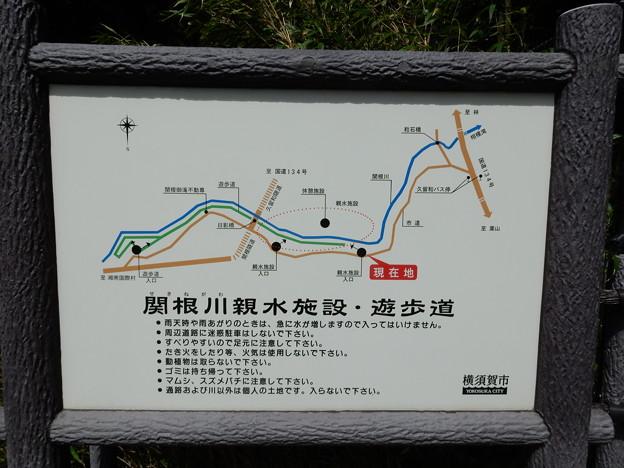 関根川親水施設・遊歩道