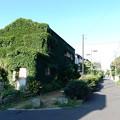 写真: 緑家