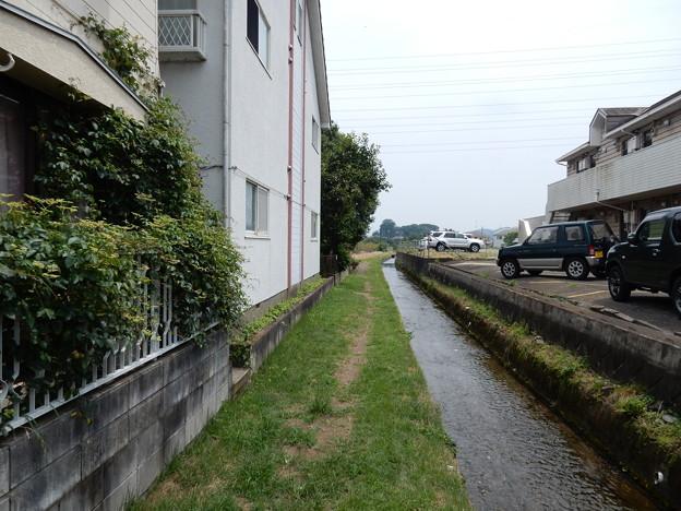 Photos: 川沿い