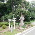 写真: 武州平山弁財天