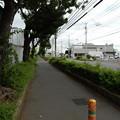 写真: 藤沢街道沿い