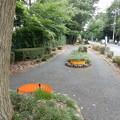 写真: 木もれび通り
