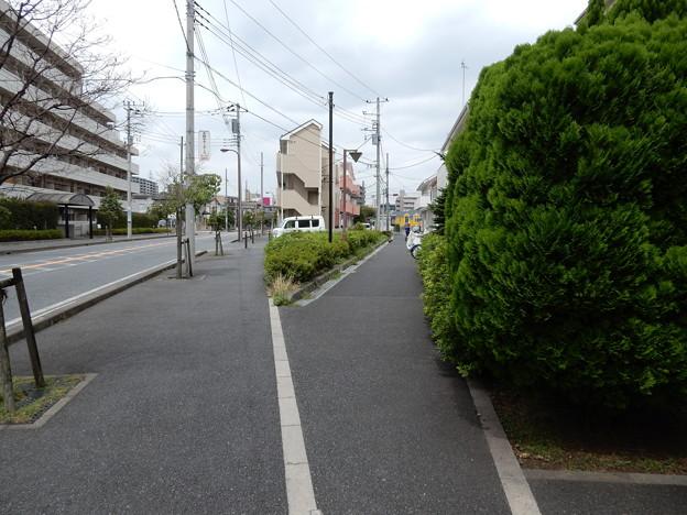 写真: 歩道
