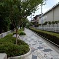 Photos: 相模緑道