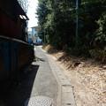 写真: 東生田自然遊歩道