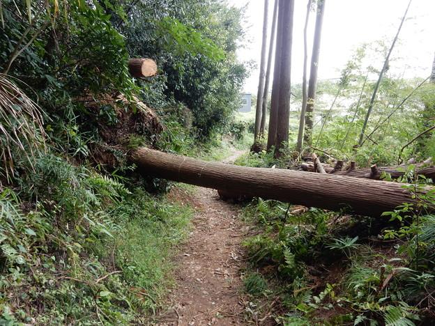 出口手前で倒木