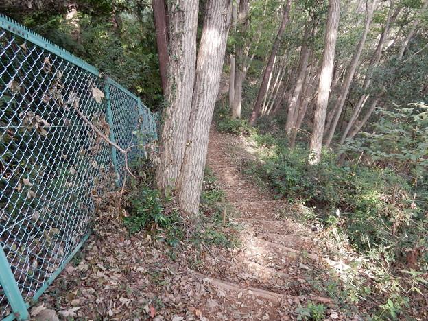稜線に出たらフェンス沿いを歩けば