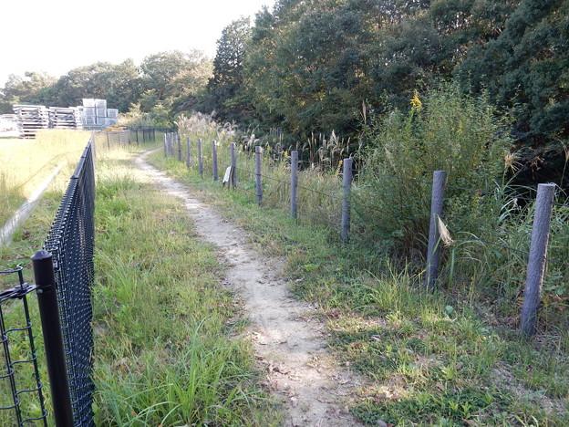 フェンス沿い