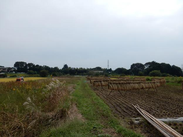 写真: 農道