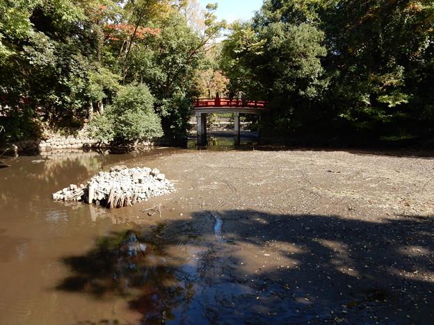 池の水ぜんぶ抜く