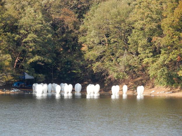 湖に浮かぶ物体