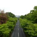 Photos: ひかり橋北