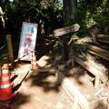 Photos: 沢のさんぽ道は工事中