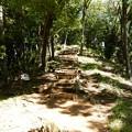 Photos: 森の小道