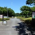 Photos: あつぎつつじの丘公園