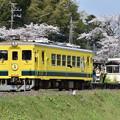 Photos: いすみ鉄道 普通列車 15D