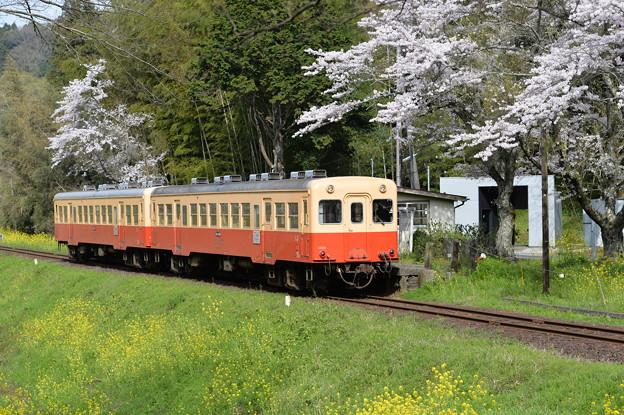 小湊鐵道 普通列車 14A