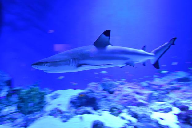 サメの一種かな?