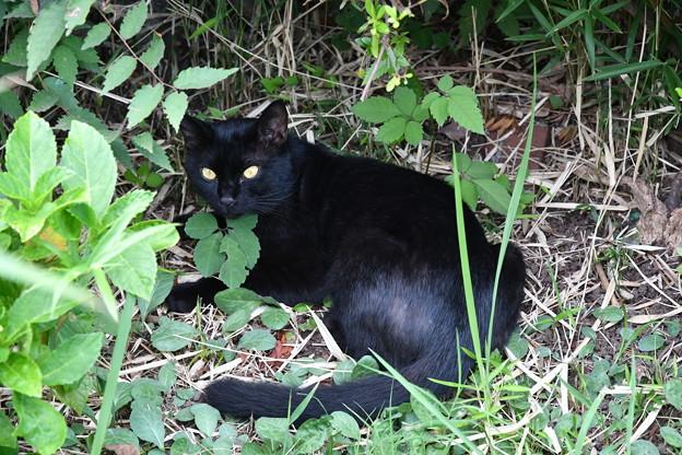 Photos: 津田沼にいた野良猫