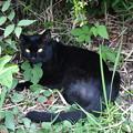 津田沼にいた野良猫