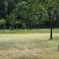 写真: 樹木たち1
