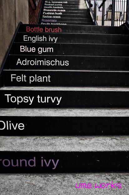 Ivy Step