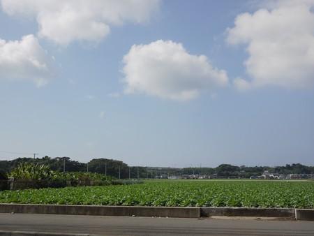 三浦大根畑でしょうか