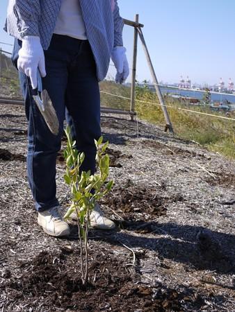 海の森植樹まつり-7