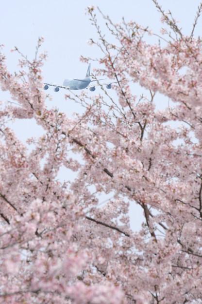 写真: 春の空の中、上昇中