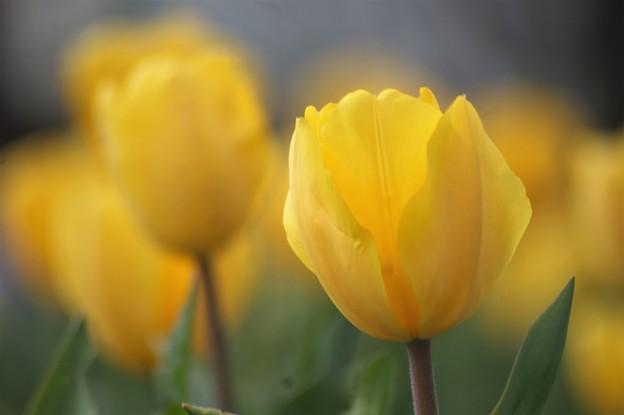 咲いた咲いた