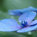 写真: 入梅の候
